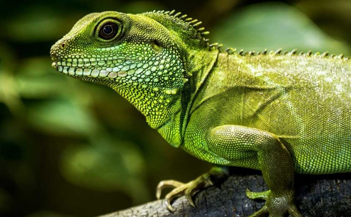 water dragons care